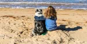 First Landing Camping Pets Beach