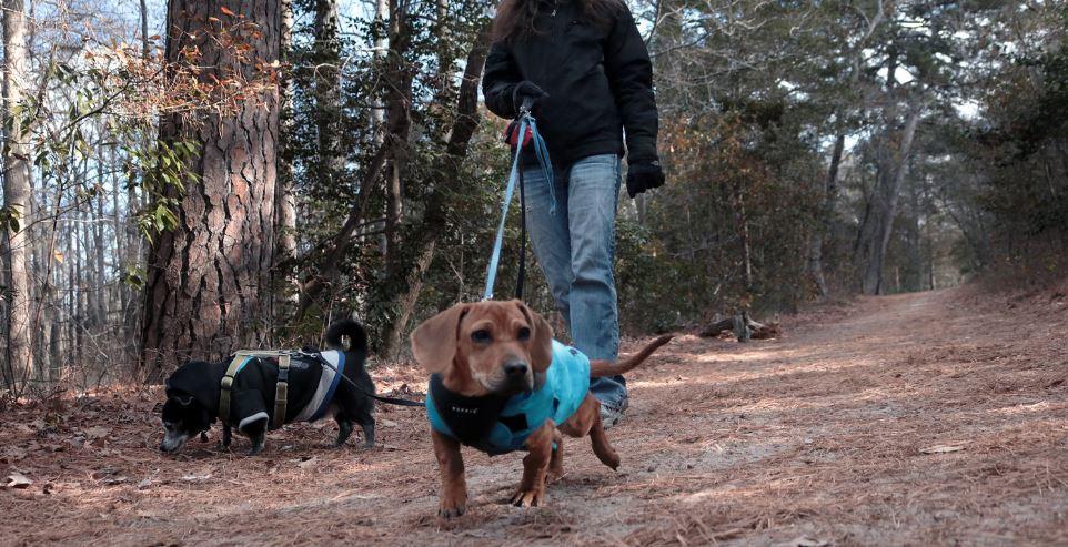 First Landing Camping Pets